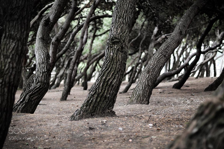 Photograph Dancing trees by Tarek Ben Slimane on 500px