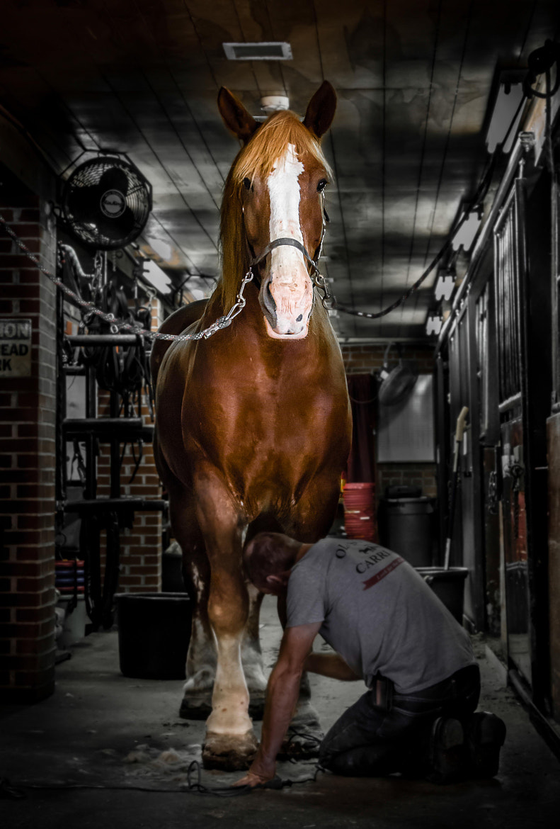 Photograph The Horse and the Master by Batu Berkok on 500px