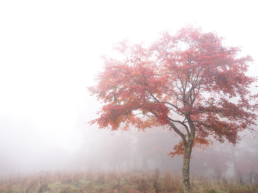 misty autumn leaves by minmsee on 500px.com
