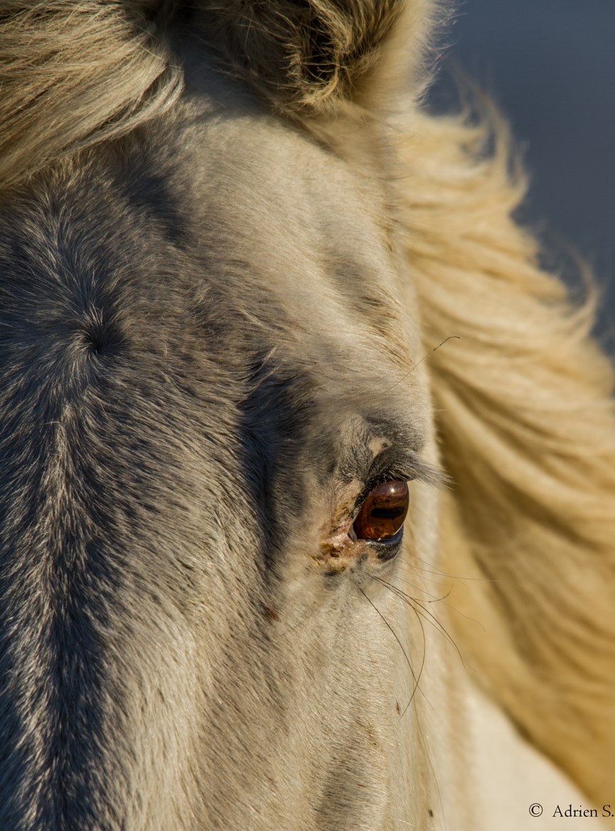Photograph horse by Adrien Sauvage on 500px