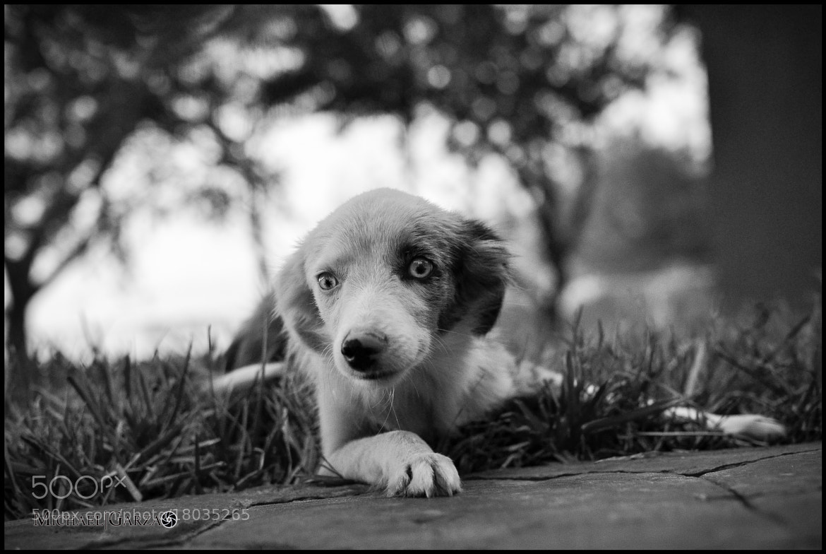 Photograph Just a Puppy by Ryan Garza on 500px