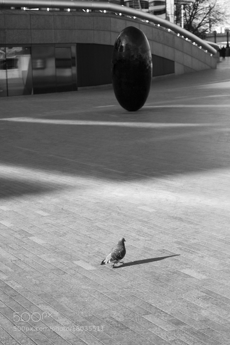 Photograph pigeon and his egg by Patrick Weinhofer on 500px