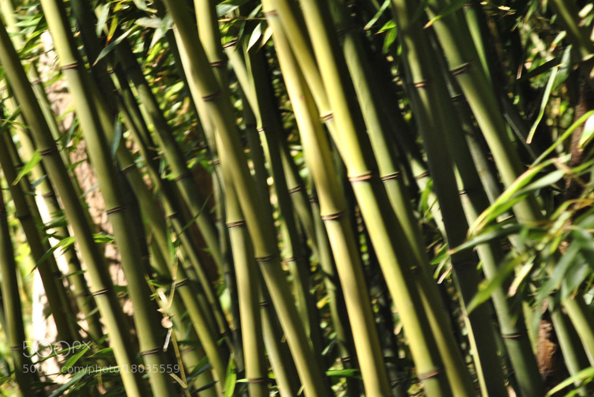 Photograph Bamboozled!  by Ruth Spicer on 500px