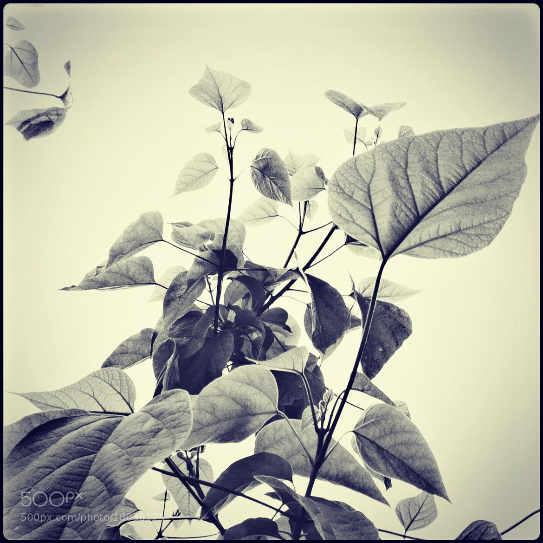 Photograph Growth by Dmitriy Plotnikov on 500px
