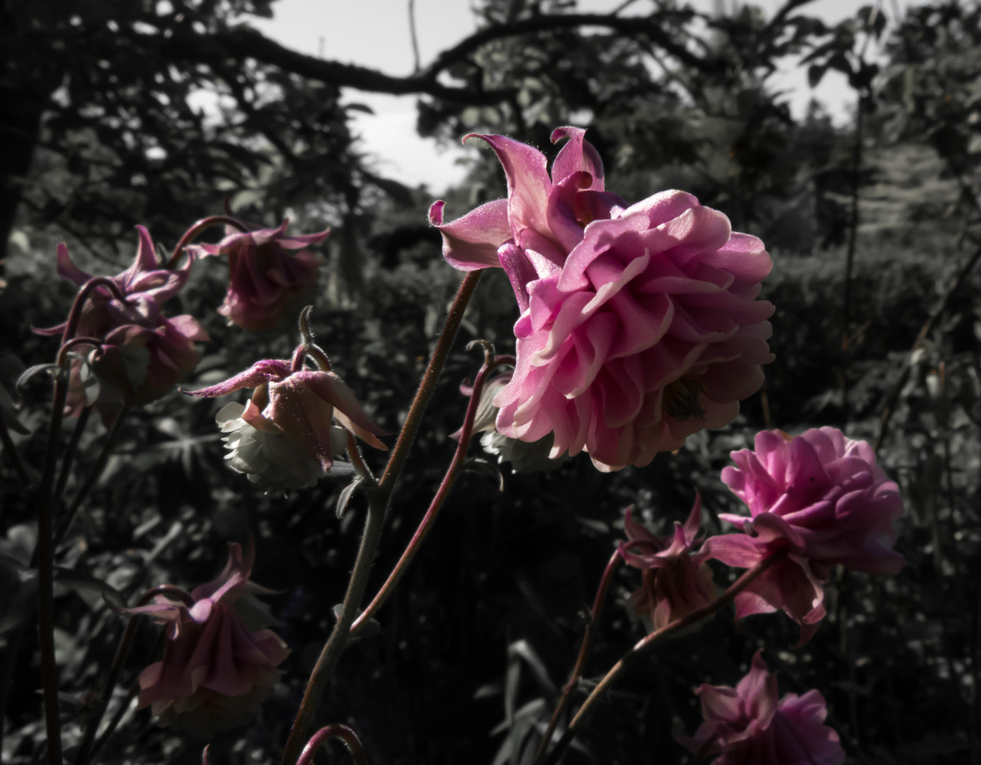 Photograph Pink flowers by Adam Z on 500px