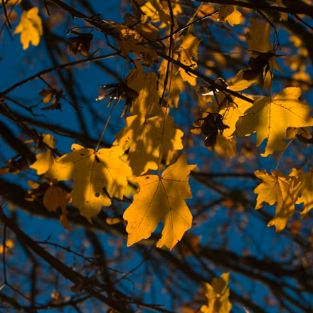 herbst, Canon EOS 30D, Canon EF 55-200mm f/4.5-5.6
