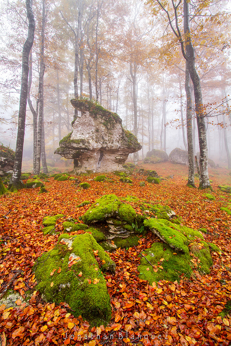 Photograph The gnome of the enchanted forest and his treasure by Jonathan Blanquez on 500px