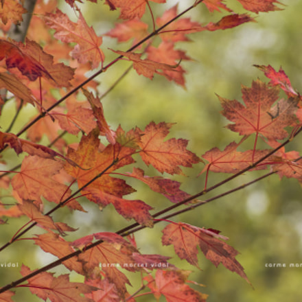 Red autumn, Canon EOS 600D, Canon EF 55-200mm f/4.5-5.6 II USM