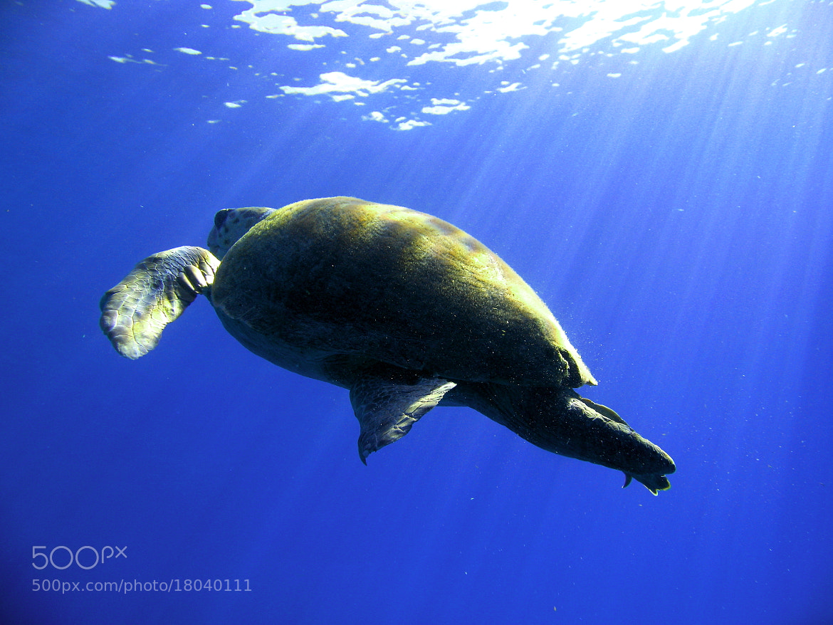 Photograph Caretta by Fatih Aydın on 500px
