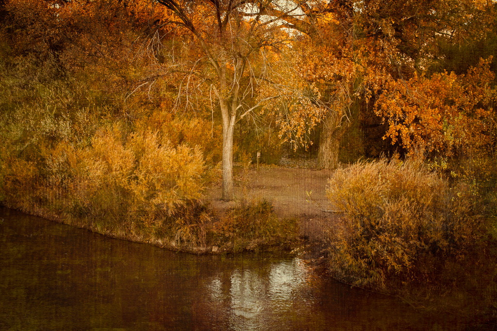 Photograph Rio Grande Autumn by Emily Mulder on 500px