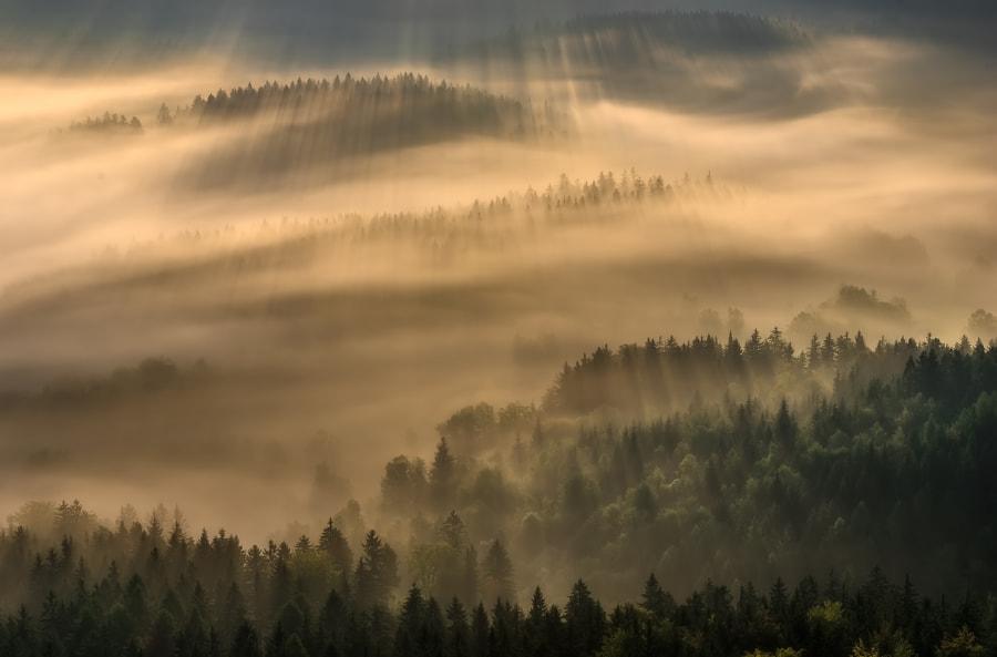 Dancing fogs