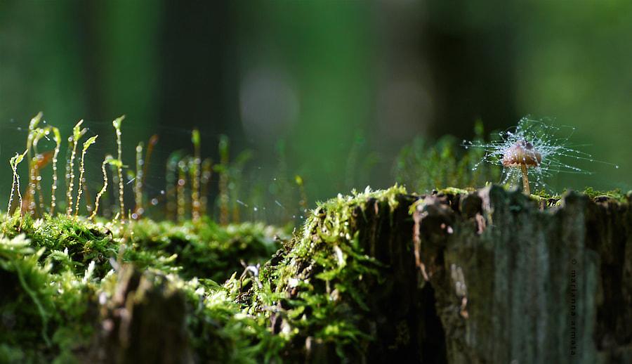 fungus on fungi