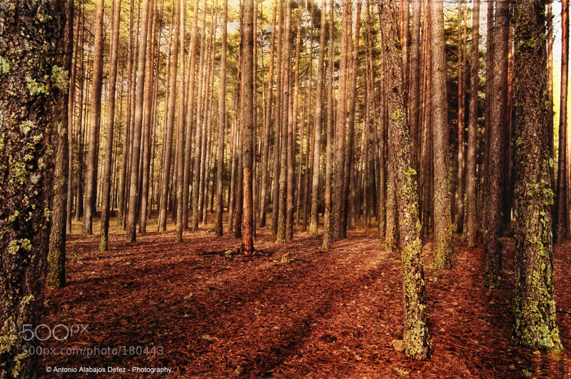 Photograph Enchanted forest by Antonio Alabajos on 500px
