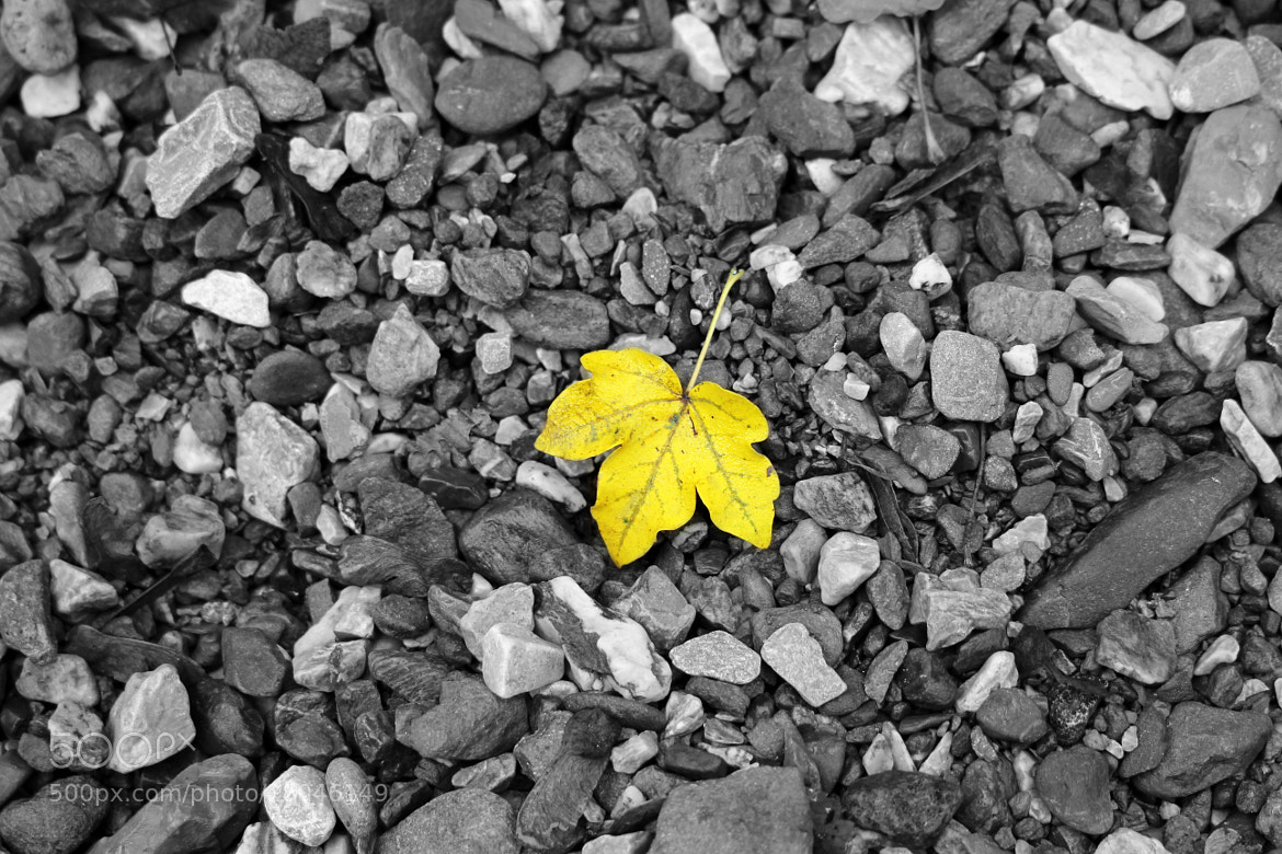 Photograph The Yellow Leaf by Dusan Drndarevic on 500px