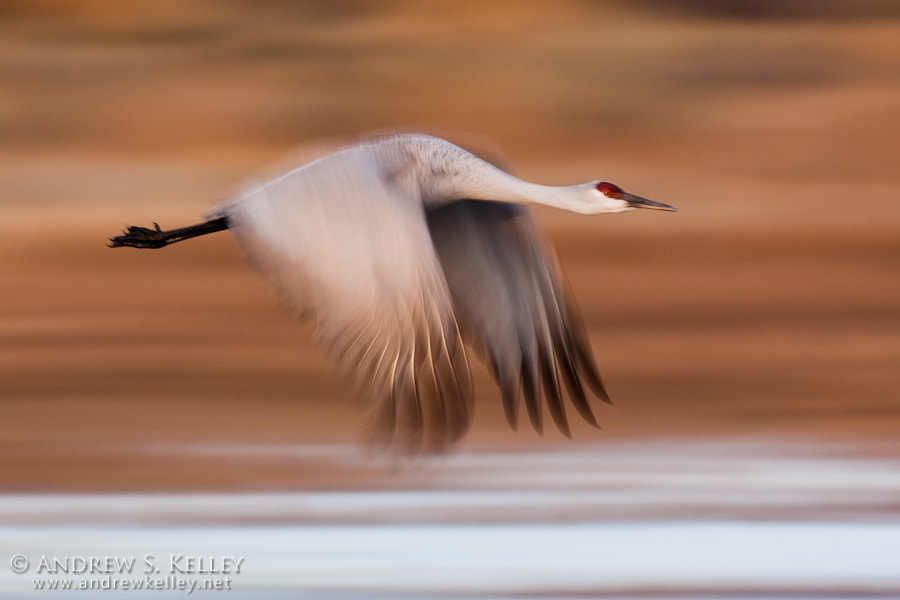 Photograph Pan Blur by Andrew Kelley on 500px
