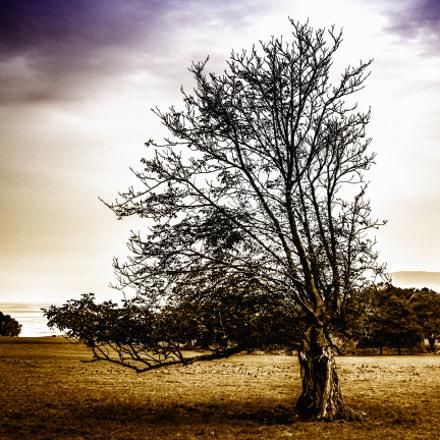 Penrhyn castle - tree
