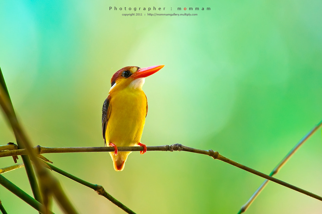 Photograph black-backed by mommam 777 on 500px