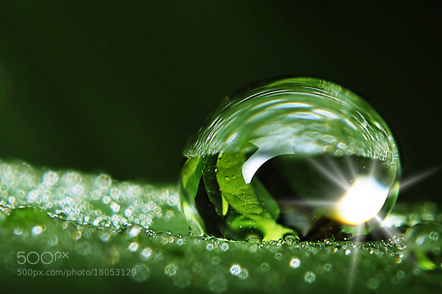 Photograph Dew's in Leaf by Sengkiu Pasaribu on 500px