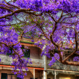 The Time of Jacaranda by Andrei Metelski (AndreiMetelski)) on 500px.com