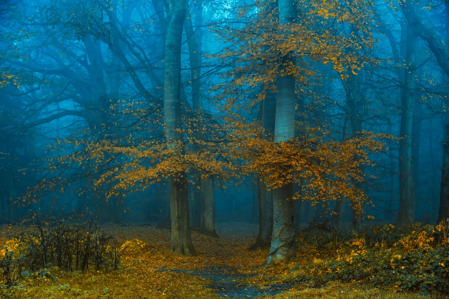 Afraid of Yellow and Blue by Lars van de Goor on 500px.com