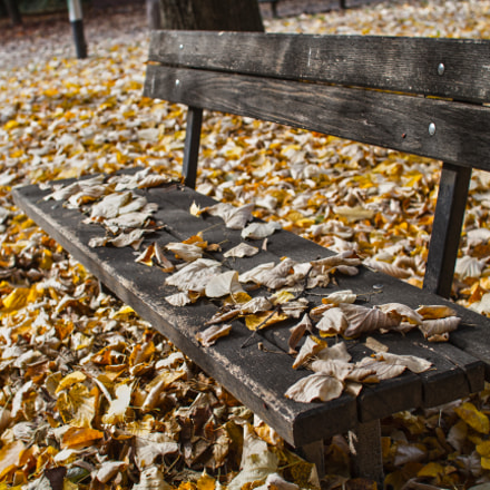Bench talking to leaves, Canon EOS 7D, Sigma 30mm f/1.4 DC HSM
