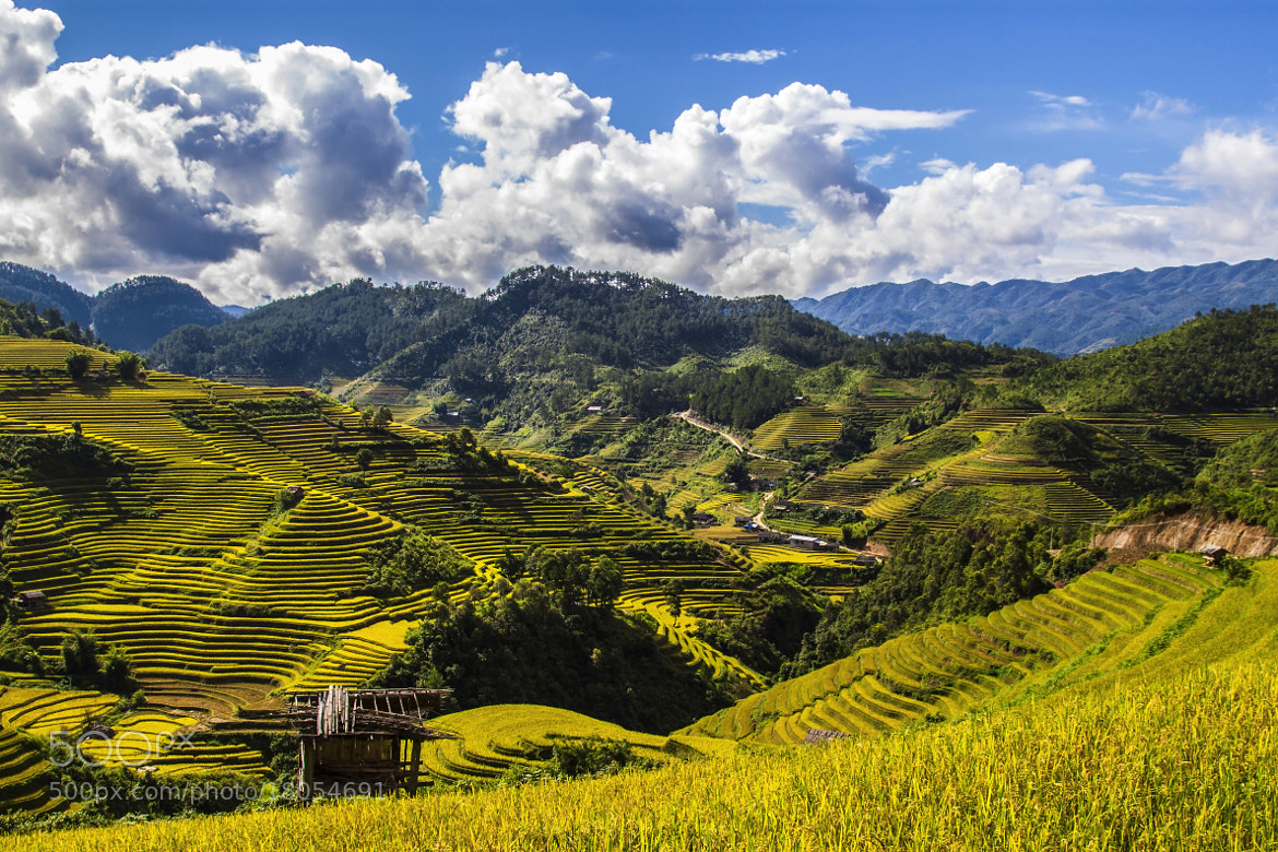 Photograph Terraced fields by Amateur Pic on 500px