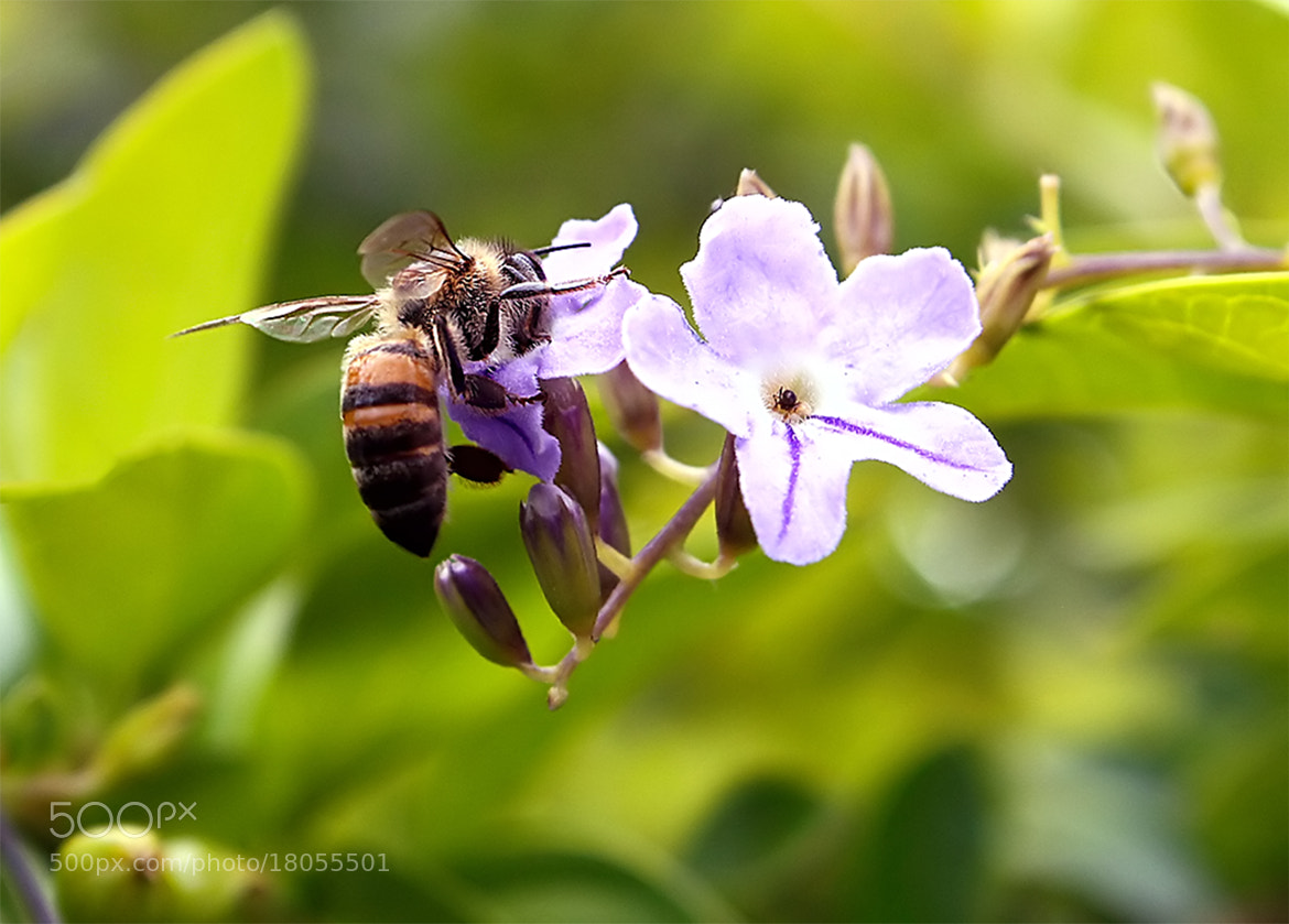 Photograph This honey is delicious!! by  Soli Rocha on 500px
