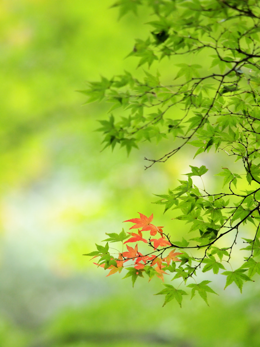 Photograph First red #2 by Kaz Watanabe on 500px