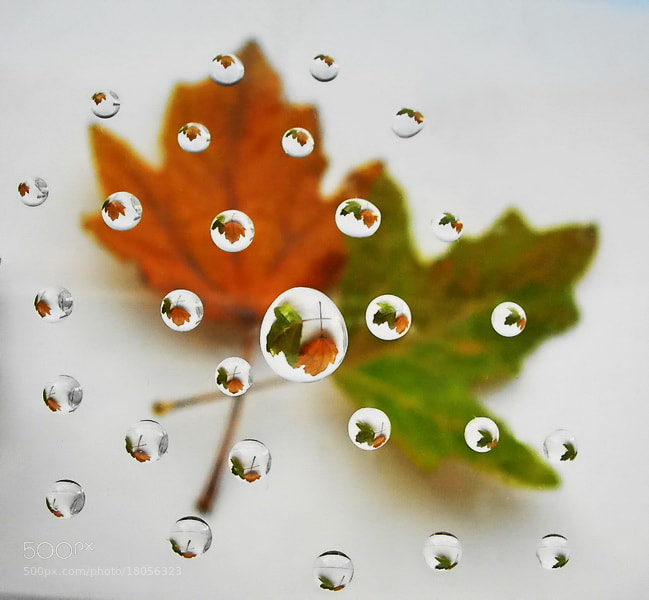 Photograph autumn leaves drops by tugba kiper on 500px