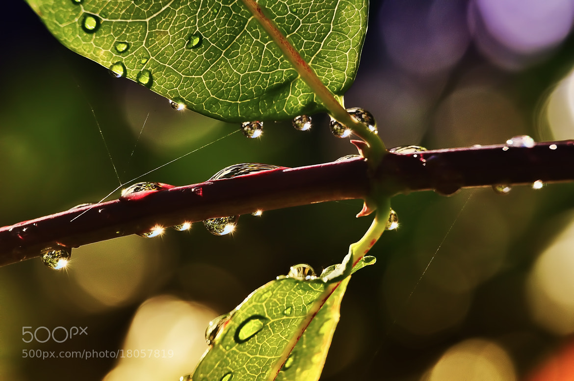 Photograph drops by Jozsef Balogh on 500px