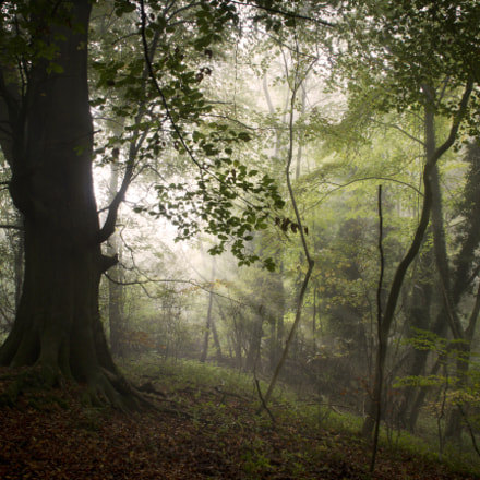 Misty woods, Canon EOS 60D, Sigma 18-125mm f/3.5-5.6 DC IF ASP