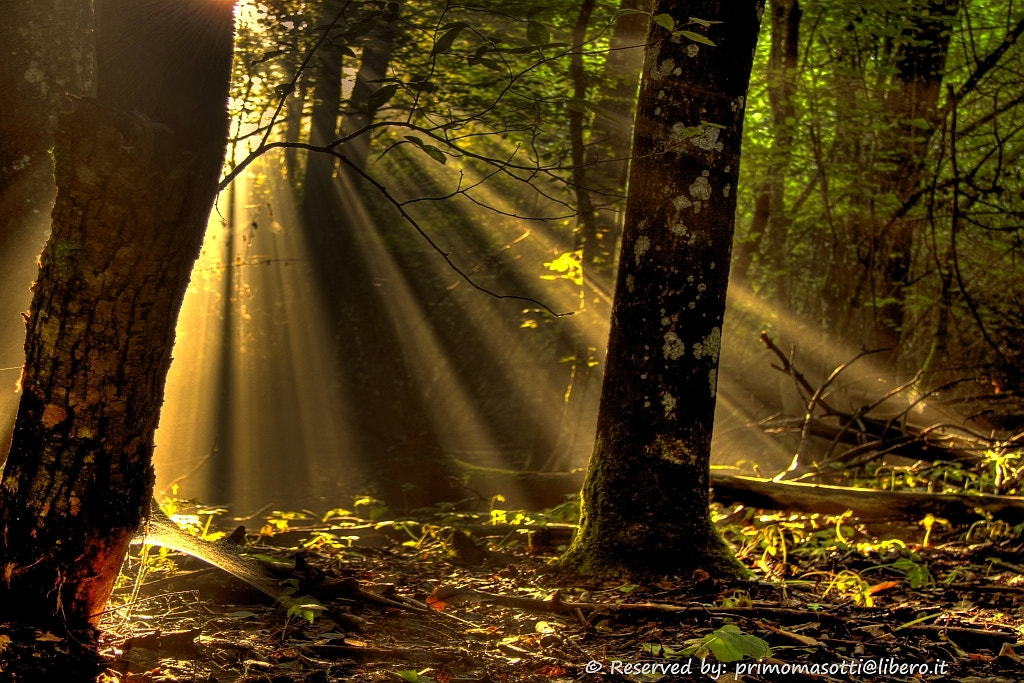 Photograph the forest welcomes you and protects you_4274_ dvd 15 by primo masotti on 500px