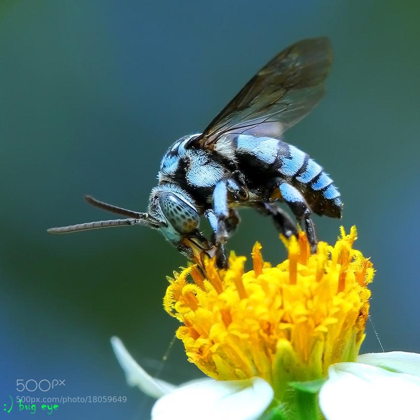 Photograph honey honey ...... by bug eye :) on 500px