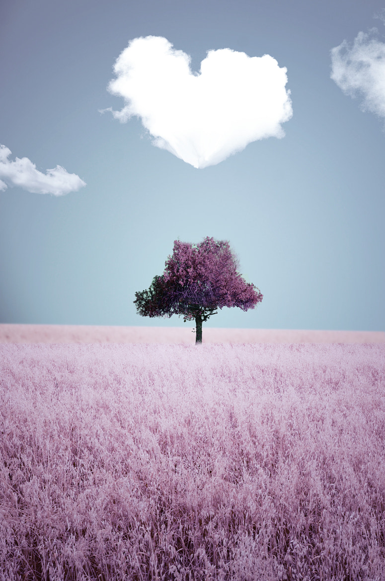 Photograph lovely small tree by Adrian Limani on 500px