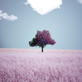 lovely small tree by Adrian Limani on 500px.com