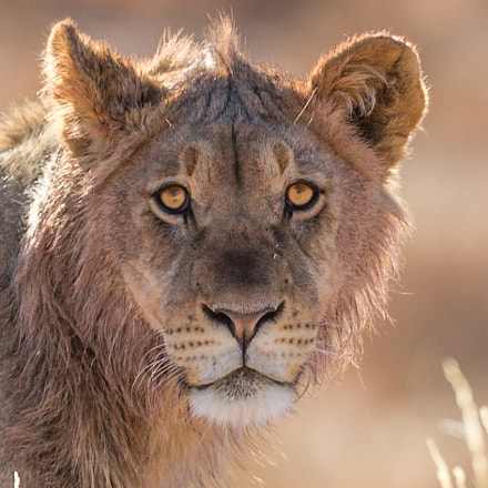Faces of Wildlife VI, Canon EOS 5D MARK III, Canon EF 200-400mm f/4L IS USM