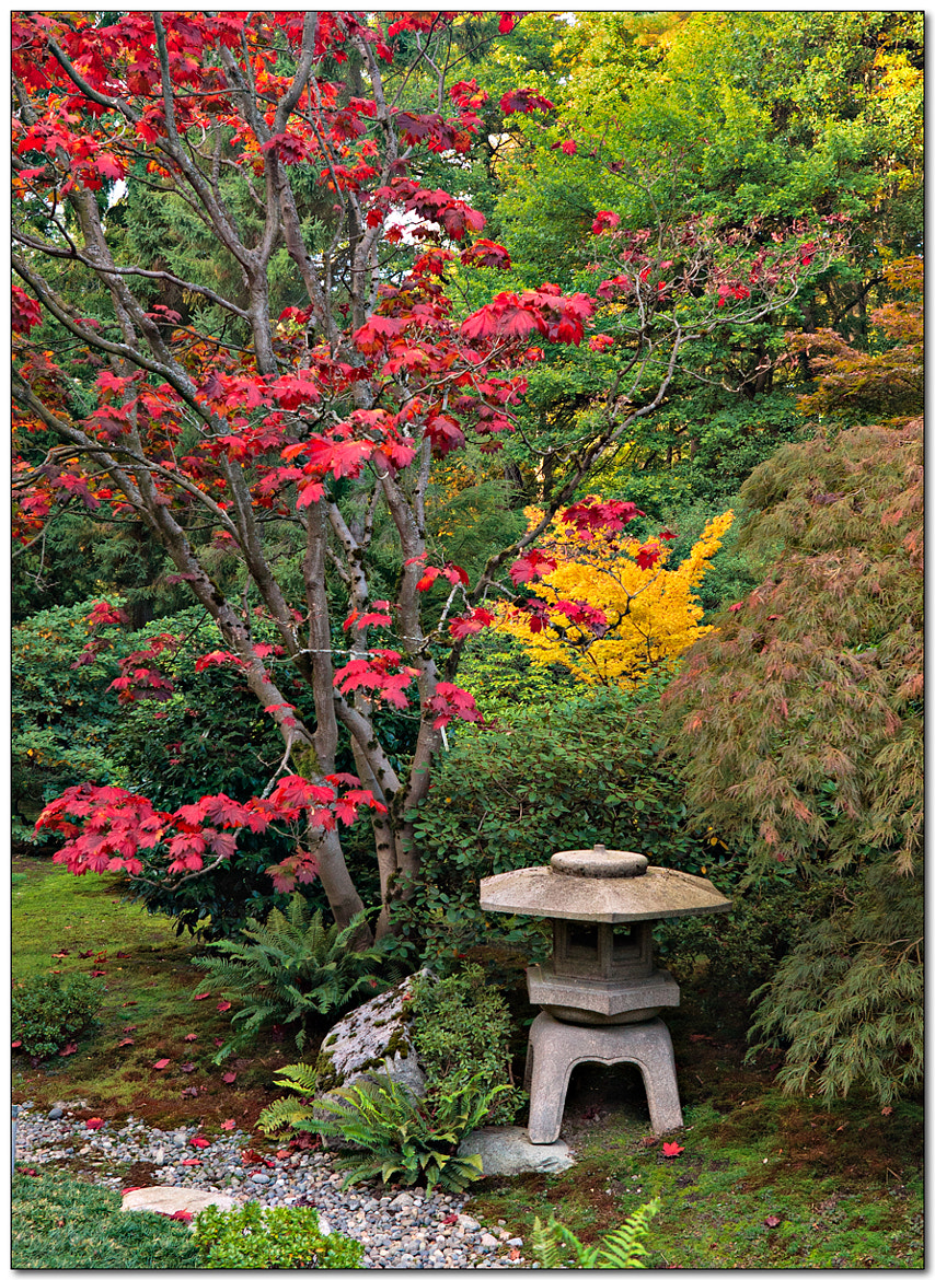 Photograph Japanese Gardens by Jameel Hyder on 500px