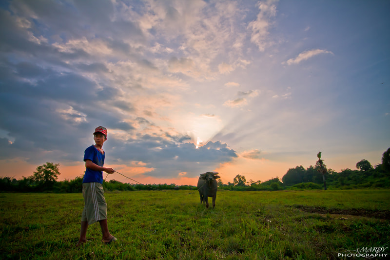 Photograph Buffalo Boy vs Sun Set! by Mardy Suong Photography on 500px