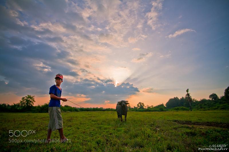 Photograph Buffalo Boy vs Sun Set! by Mardy Suong Photography on 500px