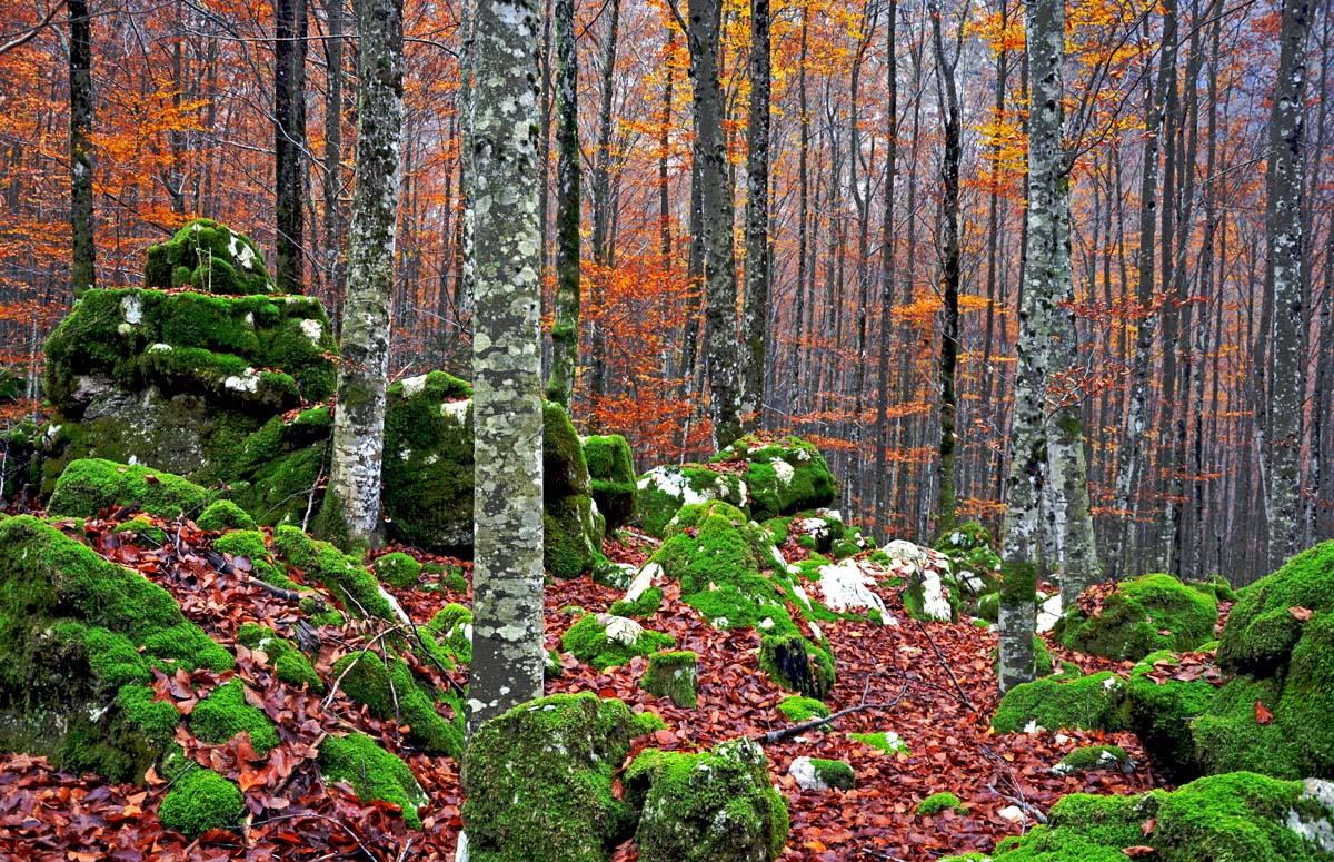 Photograph Autumn in the forest by Azman Miro on 500px