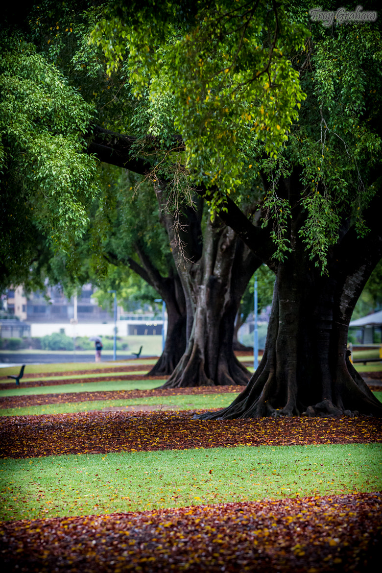 Photograph the park by Troy Graham on 500px