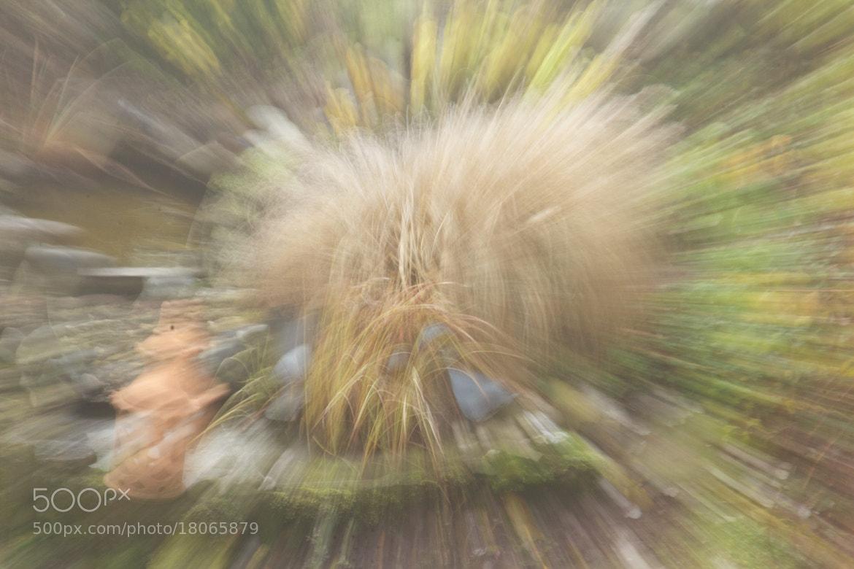 Photograph Herbsttraum by Gerhard Merz on 500px