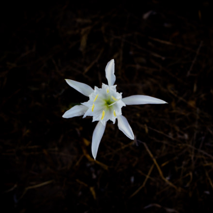 the Flower of the, Canon EOS 700D, Canon EF 38-76mm f/4.5-5.6