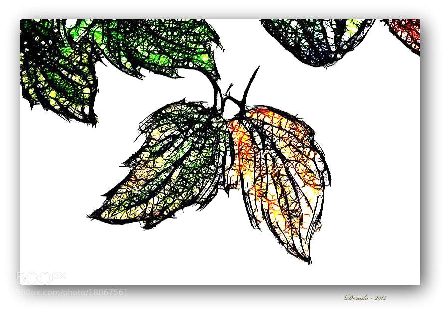 Photograph Autumn magic XLIV by Juan Dorado on 500px