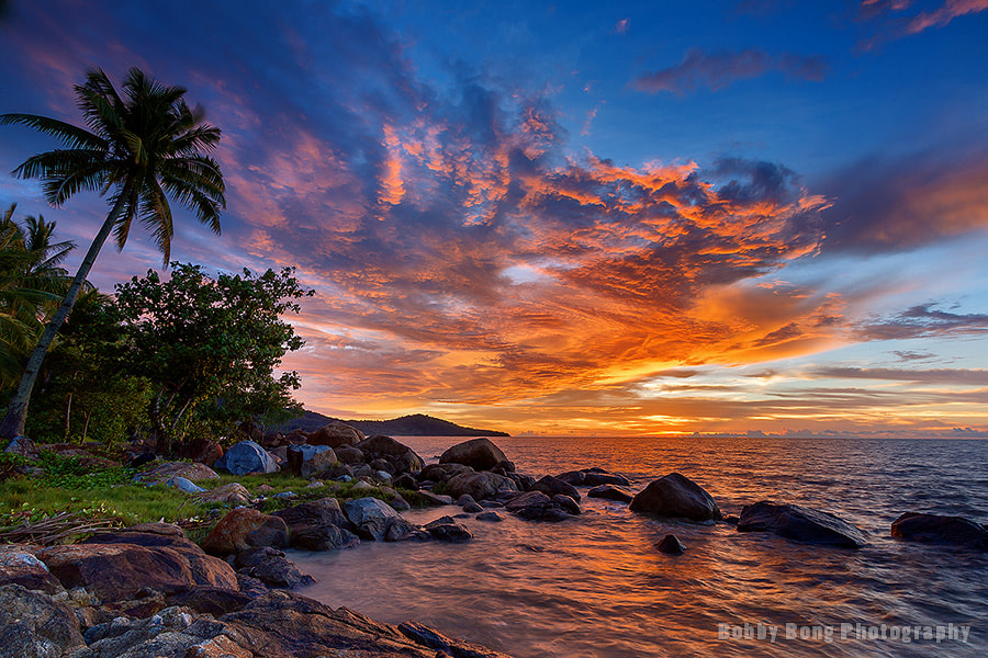 Photograph Sunset Coconut Tree by Bobby Bong on 500px