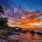 Sunset Coconut Tree