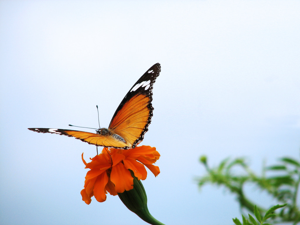 Photograph Learning To Fly by Sangeeth VS on 500px