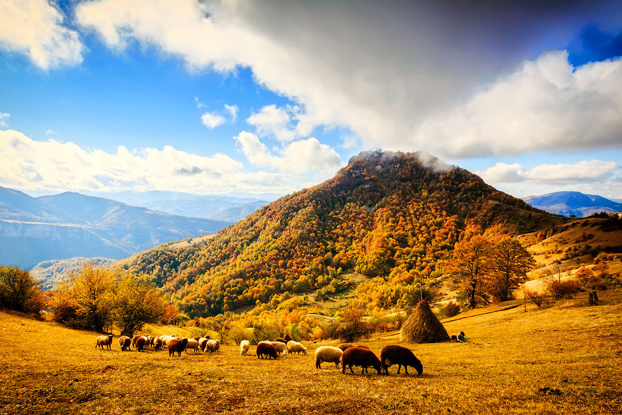 Photograph Pastoral by Evgeni Dinev on 500px