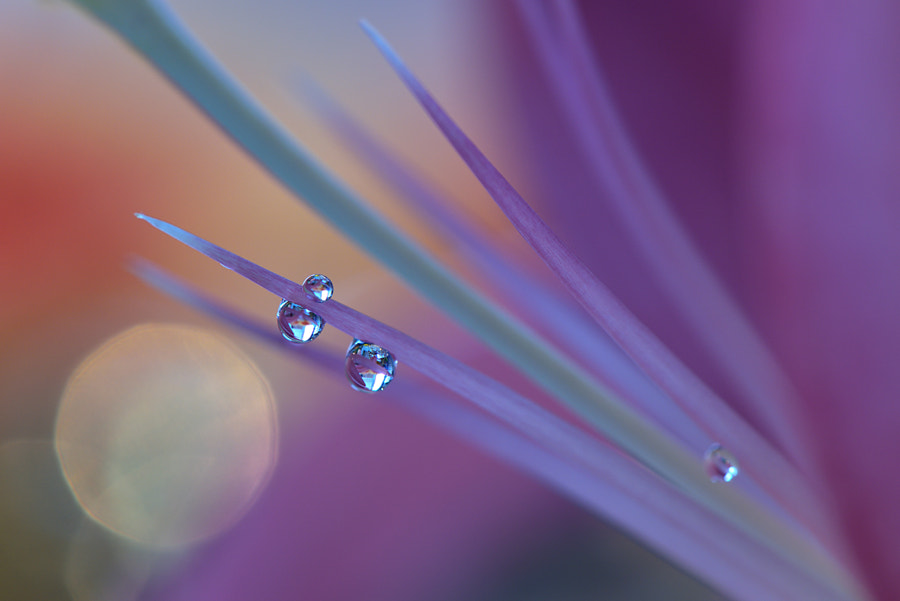 ~o~O~o~ by Juliana Nan on 500px.com