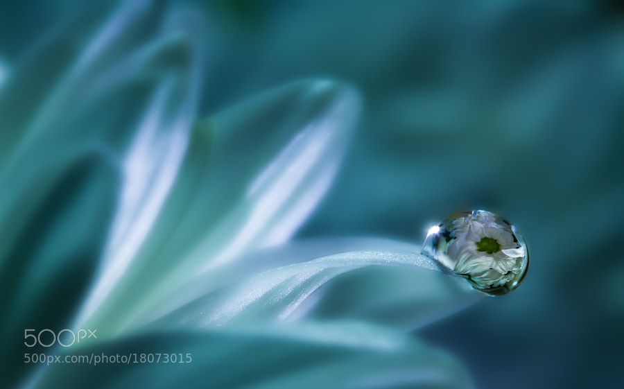 Photograph Whiteblue by Miki Asai on 500px